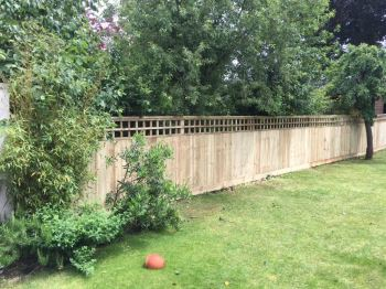 Close board fencing with trellis (3)