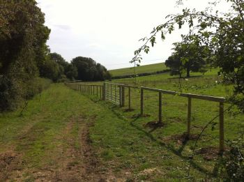 3 x barbed stock fencing with top rail and galvanised field gate.