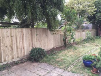 Close board fencing with trellis (2)