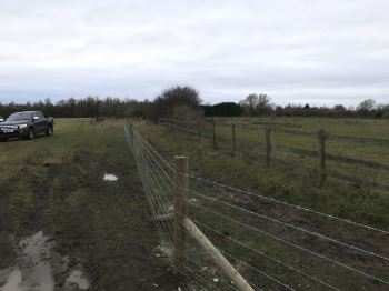 Stock fencing with barbed wire