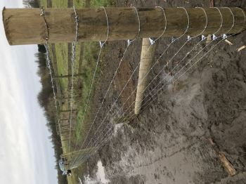 Stock fencing with barbed wire (1)