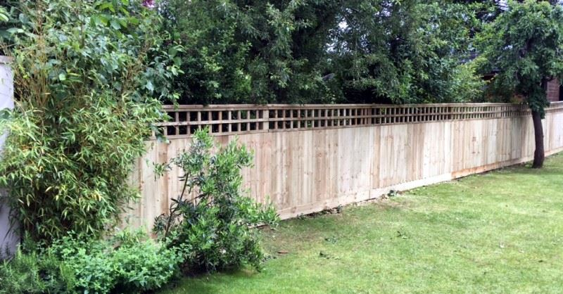 Close board fencing with trellis